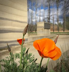 McConnell Foundation and California Poppy by Rick Bonetti
