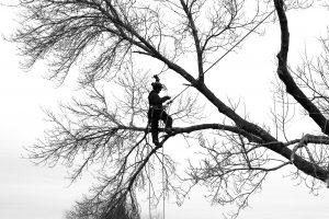 tree-trimmer-by-scott-costello-httpsgoo-glocyw4j-cc-by-2-0